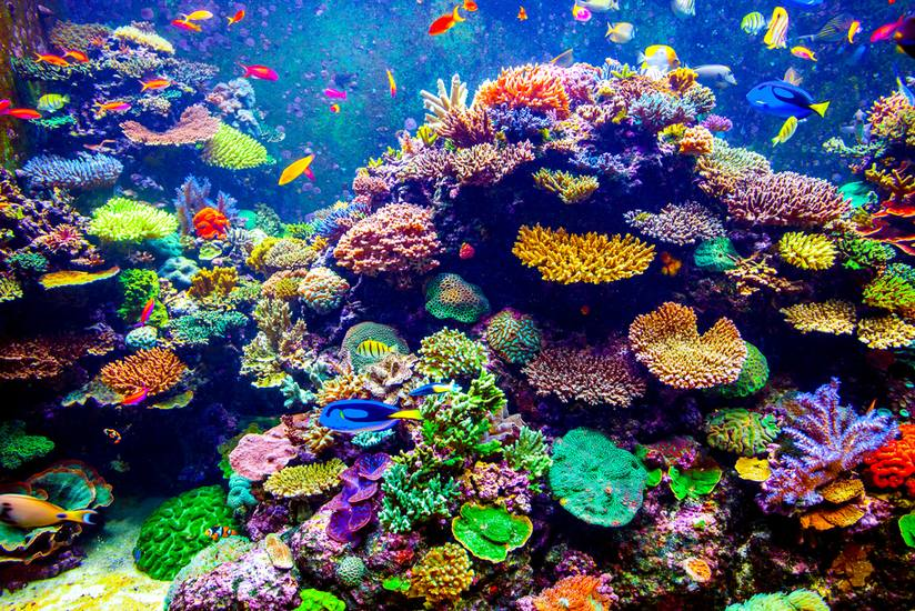 Colorful-coral-reef.jpg.824x0_q71_crop-scale