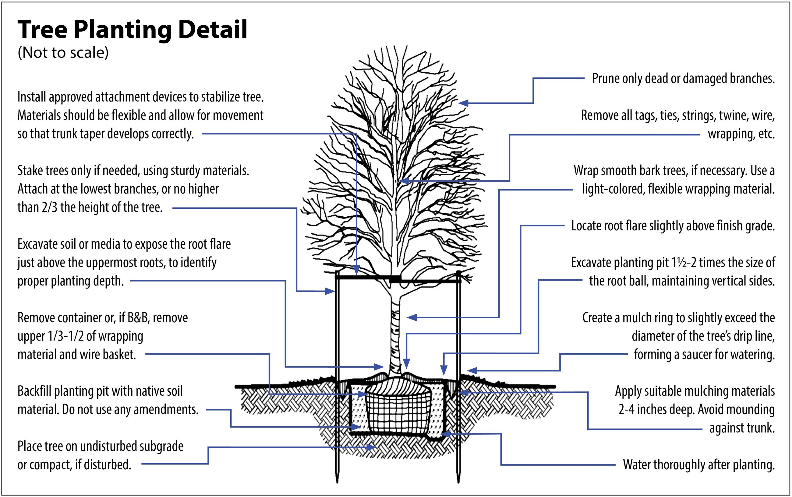 Tree planting pruning and removal lafayette in official website tree planting diagram purdue pooptronica Image collections